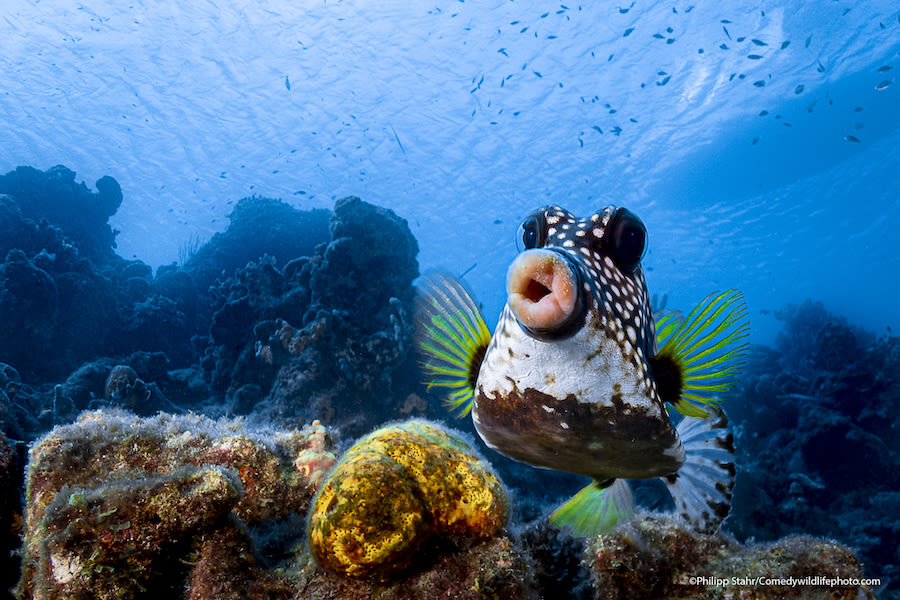 Comedy-wildlife-photography-awards-2021Philipp-Stahr_Sweet-lips-are-for-kissing_00000508 copy.jpeg
