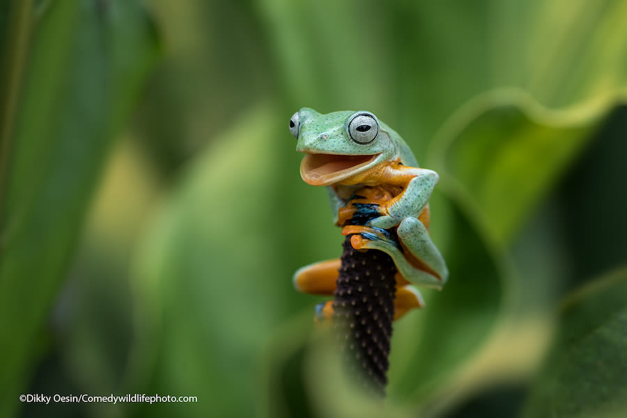 Comedy-wildlife-photography-awards-2021dikky-oesin_Yes-I-did-it_00000118 copy.jpeg